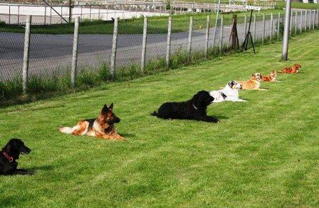 Überfüllter Terminkalender des Hundes