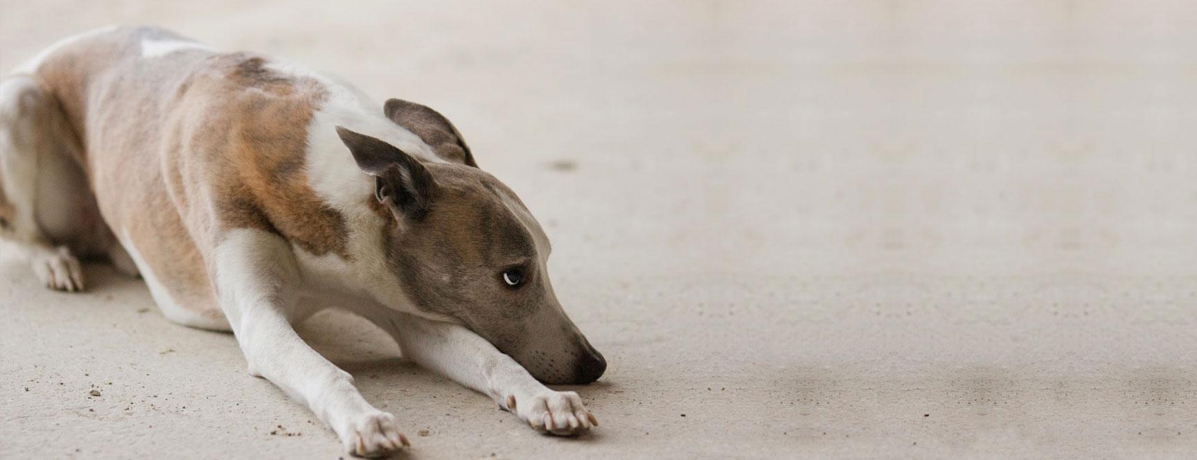 Ängstliche Hunde – Hilfe durch Ernährung und Training